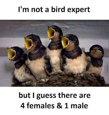 Find out males and females in birds