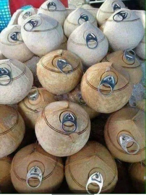 The evolution of tender coconut